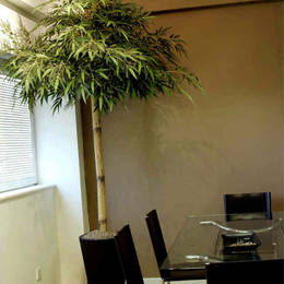Office Meeting Room With An Artificial 2 Metre Bamboo Budha Plant