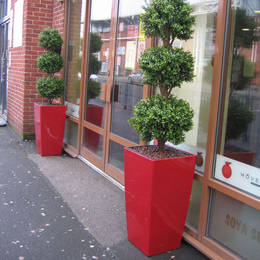 Plant Displays For Cafe Soya Birmingham Restaurant. Tall Square Cubis Red Artificial Buxus Triple Ball
