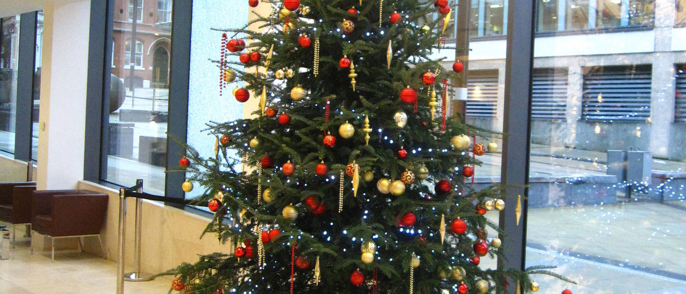 12 Christmas Tree.Christmas Tree Hire In Birmingham Services Office Landscapes