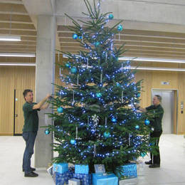 Live Christmas Tree 12 Ft For Birmingham University