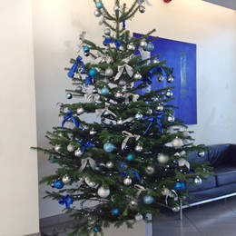 Low Drop Nordman Fir Christmas Tree Rented To Alpha Tower  Suffolk St  Queensway  B1