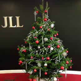 Rent This Christmas Tree For Your Companies Offices. This One Is At 45 Church St  Birmingham