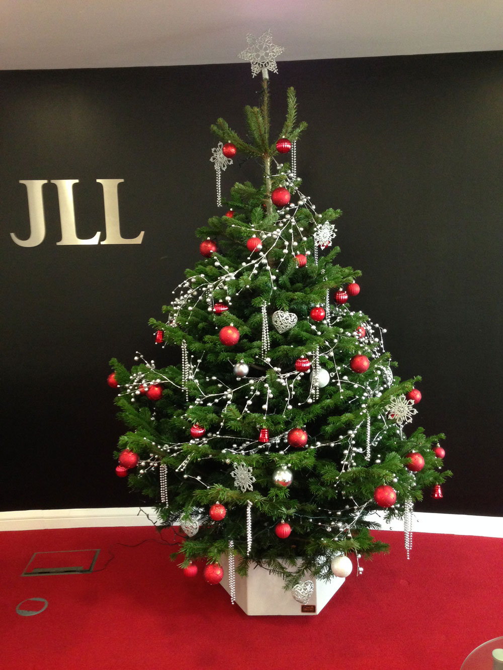 Images of Christmas Trees | Office Landscapes