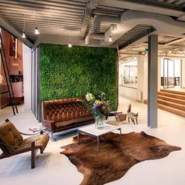 Contemporary Moss Walls for Office Receptions and design led interiors