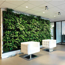 Green Walls For High Profile Office Locations