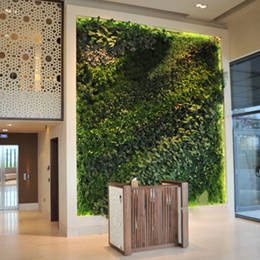 Healthy Green living tropical plant wall
