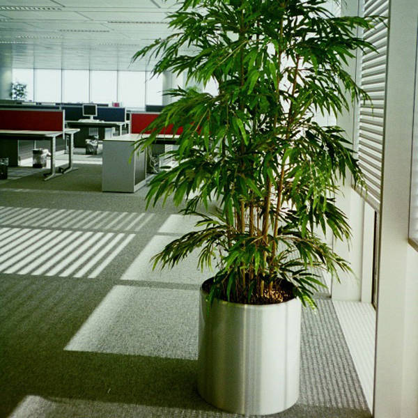 One of 1000 plant displays installed to HSBC's Canary Wharf offices
