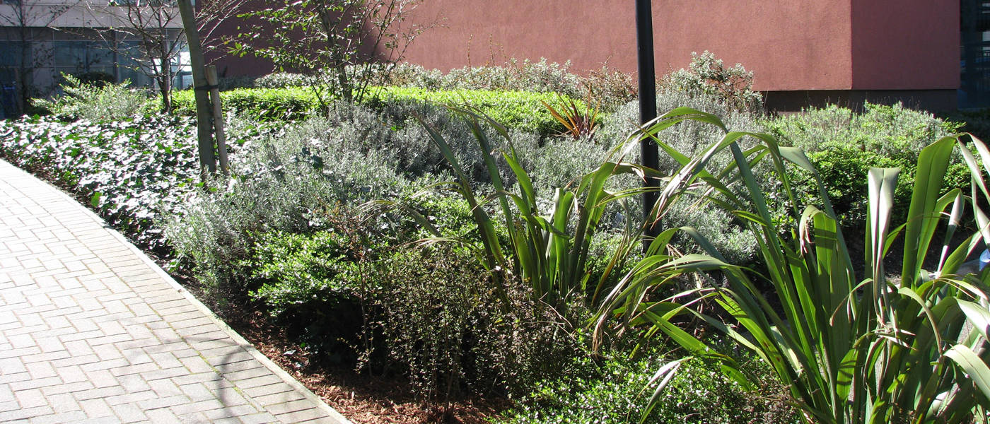 Exterior Maintenance Of Shrubs And Borders For The Crowne Plaza Midlands