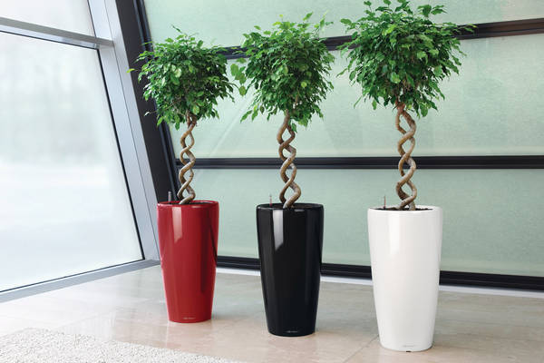 Live Plants rented & maintained for all kinds office interiors & business premises