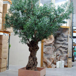 Artificial olive tree foliage is added to the aged gnarled trunk of an old tree