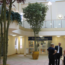 Walsall Community Healthcare Centre has tall artificial variegated leaf Ficus Trees