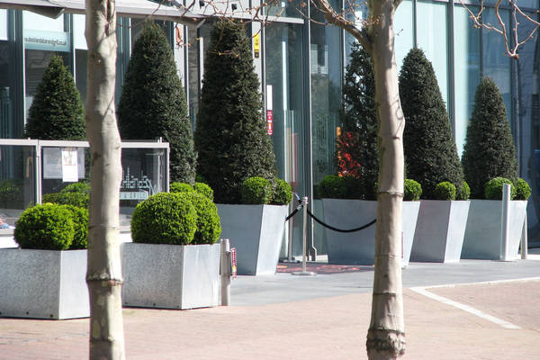 Enhace your business exterior with stunning clipped topiary Exterior Landscaping
