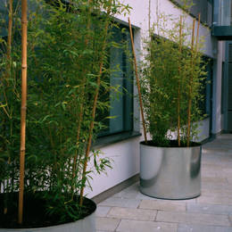This inner courtyard area has large circular galvanised planters with tall vibrant green bamboo trees