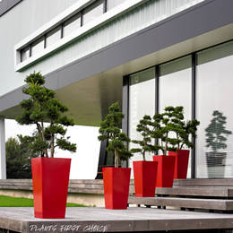 A line of five tall Cubis displays with eye catching topiary Cloud Trees