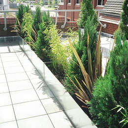 Rooftop garden has varied planting in Rectangular Galvanised planters