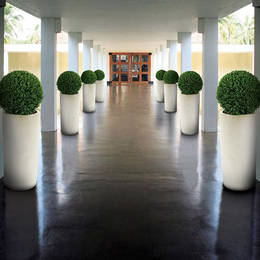 An exterior corridor is greatly improved with four identical buxus ball displays along each side