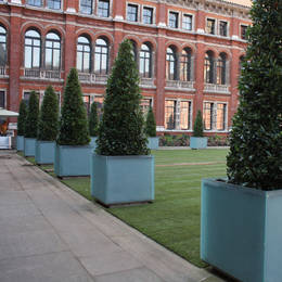 Stunning clipped topiary trees shows what a difference well designed exterior planting can make