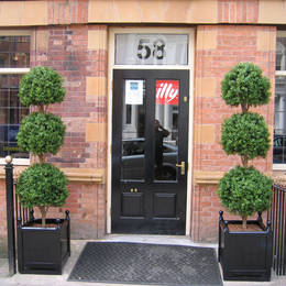 This simple exterior landscaping, frames the entrance to a Cafe with two triple ball topiary trees displays