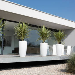 Exterior plants are used to create maximum visual impact with four identical displays on the patio of this ultra modern building