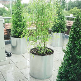 Exterior conifers & bamboo are used in this contemporary Landscaping Scheme for a rooftop garden