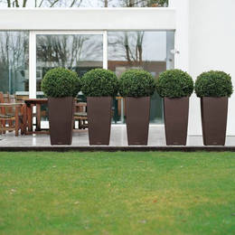 A line of identical clipped topiary buxus balls make an attractive feature of this exterior garden patio