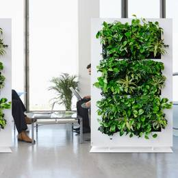 Freestanding green office dividers using live plants