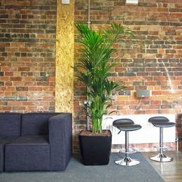office plant displays. bushy kentia palm display office plant displays
