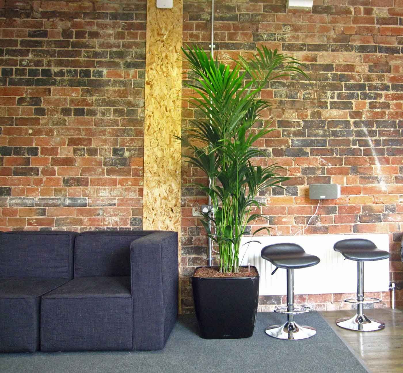 informal green wall indoors. Informal Meeting And Breakout Area With A Bushy Kentia Palm Display Green Wall Indoors