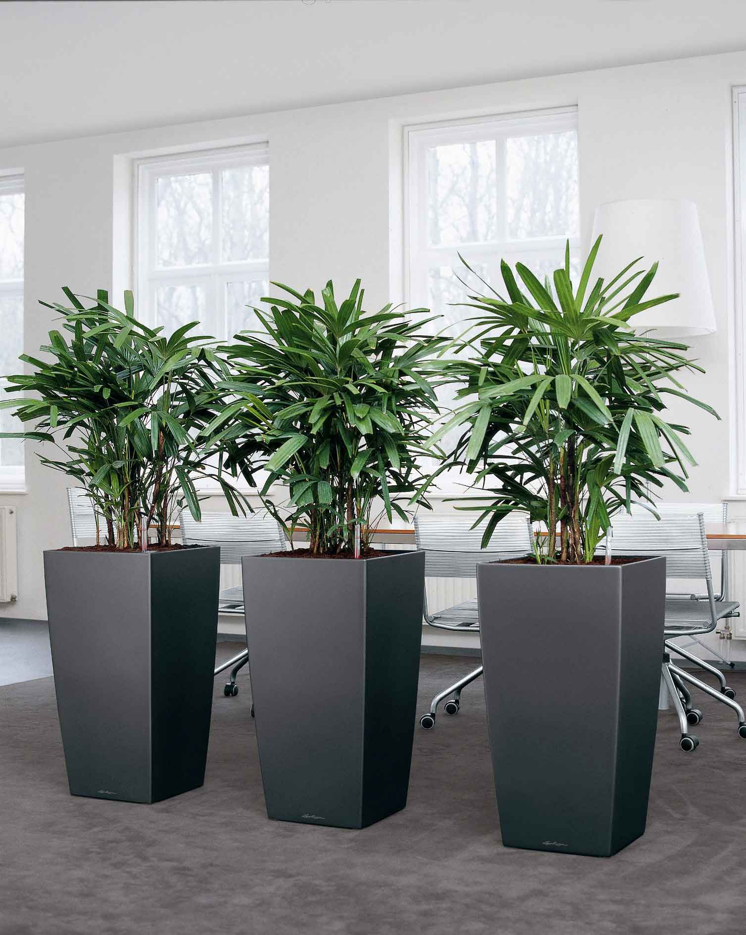 Images of live office plant displays office landscapes - Tall office plants ...