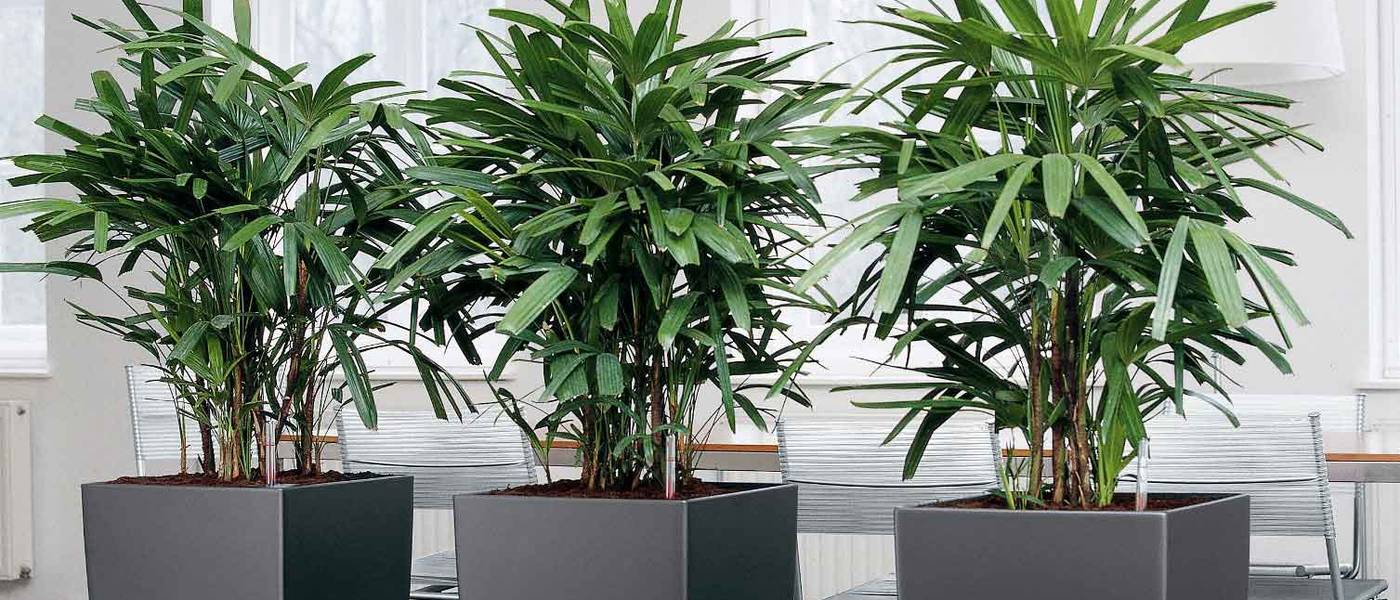 Tall Square Charcoal Grey Plant Displays