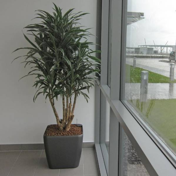 Striking Modern Plant Displays for Bolton BL5 offices
