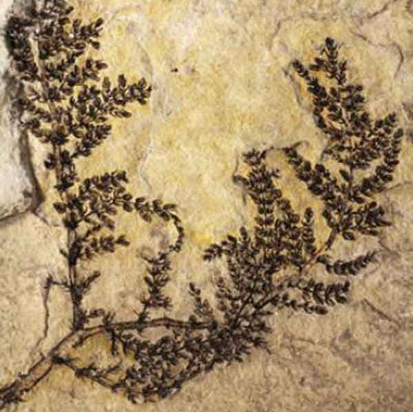 Could this be the oldest plant in the world?
