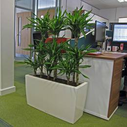 White rectangular Plant Display used as a screen alongside office desks