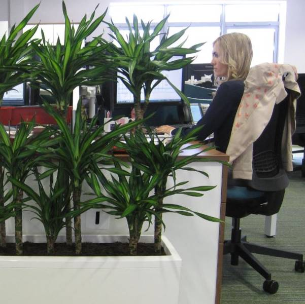 How Important Plants Are To The Workplace