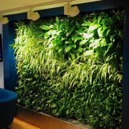 Green Walls with additional Grow lighting Improve the look of the wall & help the plants thrive