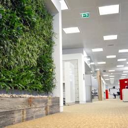 Our Gorgeous Green Walls look great & improve the air by removing harmful VOC chemicals