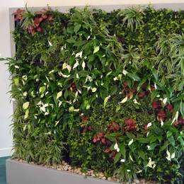 Our fully maintained Green Walls are space saving vertical gardens