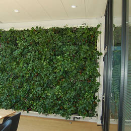 Transform your workplace with a Green Wall, they look great & Purify the air