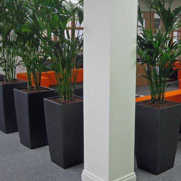 Office Landscapes for Office Plants Green Screens & Green Walls