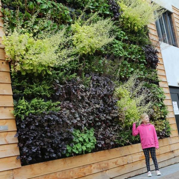 Green Walls make towns & cities greener & healthier