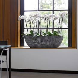 Large Orchid Windowsill Display In Wave Boat Planter