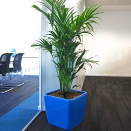Electric Blue Plant Displays Look Stunning In these Birmingham Offices