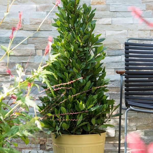 Bay Trees & Grounds Maintenance In the Midlands