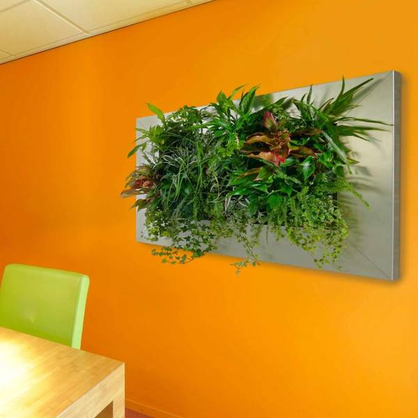 Live Picture plant displays are mini Green Walls for Offices, Restaurants & Hotels in Milton Keynes