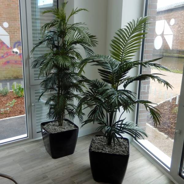 Artificial Palm Plants for offices, Hotels & Restaurants in Birmingham and the West Midlands