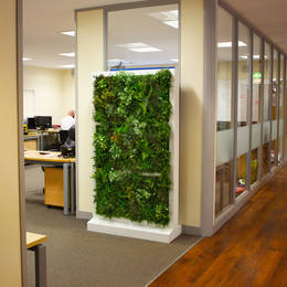Artificial Freestanding Green Wall Used As An Office Screen