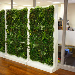 Artificial Freestanding Green Walls Scan Be Used As Dividers   Screens In Offices