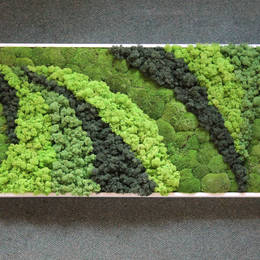 Moss Picture design using different colours of moss