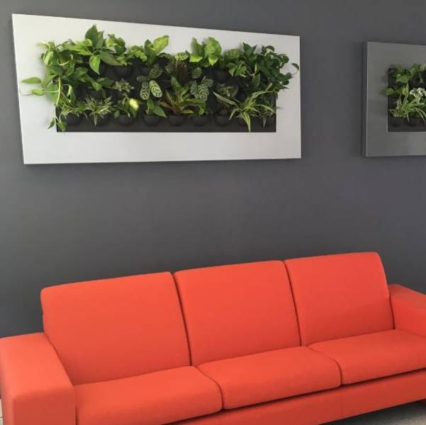 Mini Green Wall Interior Landsaping for this Nottingham Office plant walls
