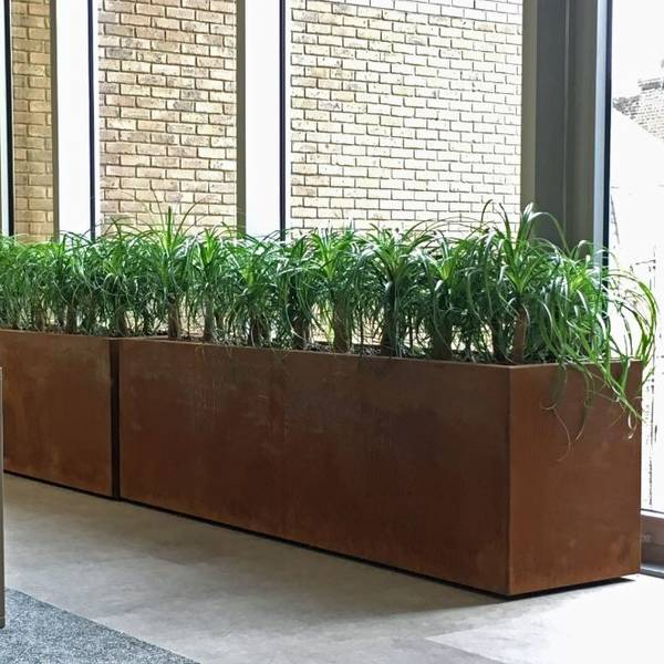 West Midlands office with large Corten Steel Beaucarnea Plant Displays